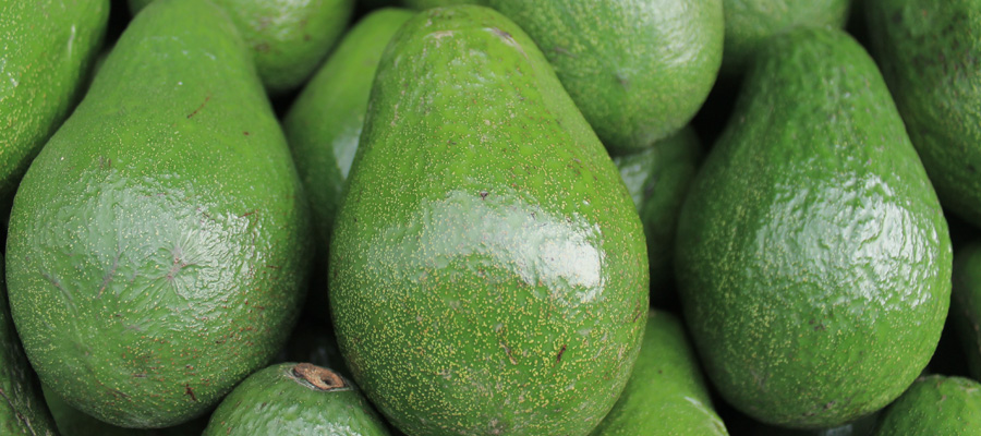 Business Lessons From an Avocado. Seriously!